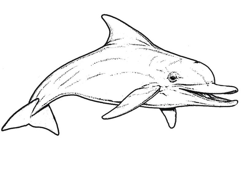 ausmalbilder delphin 2  delphin1002