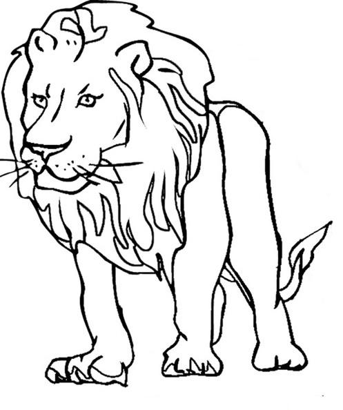 ausmalbilder löwe 14  ausmalbilder kostenlos