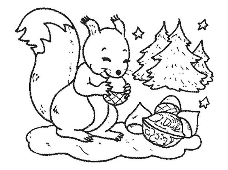 ausmalbilder eichhörnchen 16  ausmalbilder kostenlos