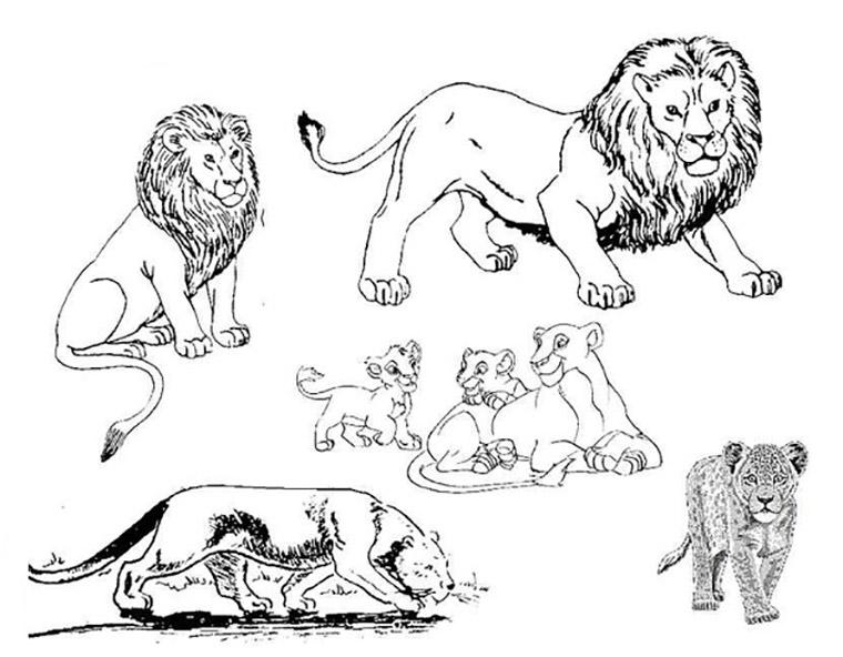 ausmalbilder löwe 2  ausmalbilder kostenlos